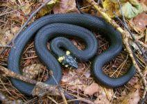 От укусов змей пострадали восемь тагильчан. В одном случае подросток получила укус кобры из домашнего террариума