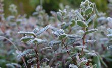 На Урале вновь объявлено экстренное предупреждение о заморозках