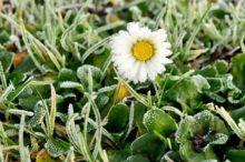 Синоптики продлили предупреждение о заморозках. Тепло на Урал придет только на следующей неделе