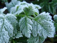 Гидрометцентр распространил экстренное предупреждение о ночных заморозках на Урале