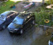 В Нижнем Тагиле шквалистый ветер повалил деревья на машины (фото)