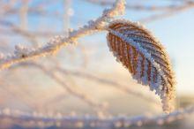 Заморозки вновь придут в Нижний Тагил