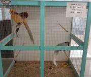 Владелец контактного зоопарка бросил животных в ТЦ, когда у него закончилась аренда помещения. «Два дня их никто не кормил и не поил» (фото)