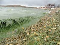 «Ощущение, что тонну зелёной краски вылили!» Черноисточинский пруд, из которого подается питьевая вода для половины жителей Нижнего Тагила, снова позеленел (фото)