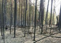 После страшного пожара в парке «Река Чусовая» все же возбуждено уголовное дело