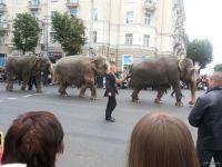 По улицам города проведут слонов: на гастроли приедет цирк-шапито братьев Гертнер