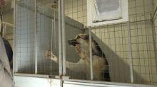 Специалисты мэрии проверили приюты для собак с которыми заключены контракты по передержке. В «Добрые руки» чиновников не пустили (видео)