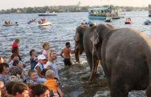 В Нижнем Тагиле прошло купание слонов в пруду (фото, видео)