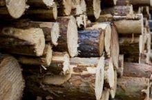 В Нижнем Тагиле осудили узбека за контрабанду леса