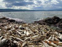 В Нижнем Тагиле будут искать источник воды на замену Черноисточинскому пруду