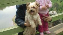 В Кольцово рассказали о гибели собаки, брошенной тагильчанами в аэропорту
