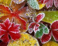 Экстренное предупреждение о заморозках вновь пришло в Нижний Тагил
