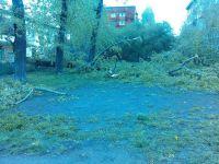 Первая гроза прогремела над Нижним Тагилом: ливень с градом и шквалистым ветром поломал деревья (фотофакт)