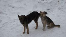 В месяц на содержание одной отловленной собаки тратится 11 тысяч рублей. В мэрии не знают что с ними делать после передержки