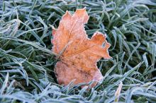 Синоптики снова предупредили о заморозках в выходные