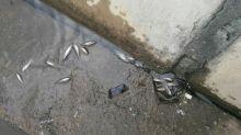 В Черноисточинском пруду вновь гибнет рыба