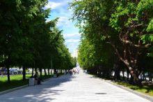 Деревья и кусты высаживаются хаотично. Гордума раскритиковала кампанию по озеленению Нижнего Тагила