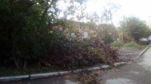Тагильчане жалуются на спиленные, но неубранные ветки деревьев во дворах (фото)