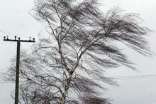 Синоптики предупреждают тагильчан о сильном ветре