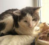 23 кошки, брошенные в квартире в Нижнем Тагиле, несколько месяцев ели трупы друг друга, чтобы выжить