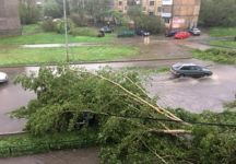 Тагильчане опасаются за свою жизнь из-за старых тополей: шквалистые ветра могут повалить деревья (видео)