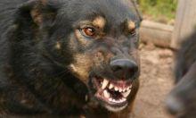 Стая бродячих собак прокусала ногу девушке, шедшей на парад победы